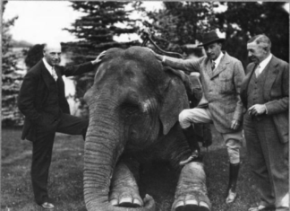 Spencer Penrose, two men and early zoo elephant