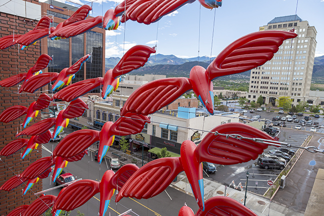 parrots hanging over downtown colorado springs street