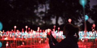 field of light installation will appear at green box arts festival
