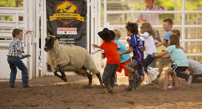 mutton bustin at COS rodeo