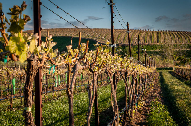 wine vineyard Proper Wines