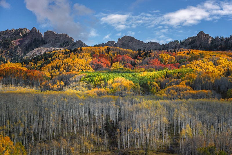 fall color aspen groves crested butte