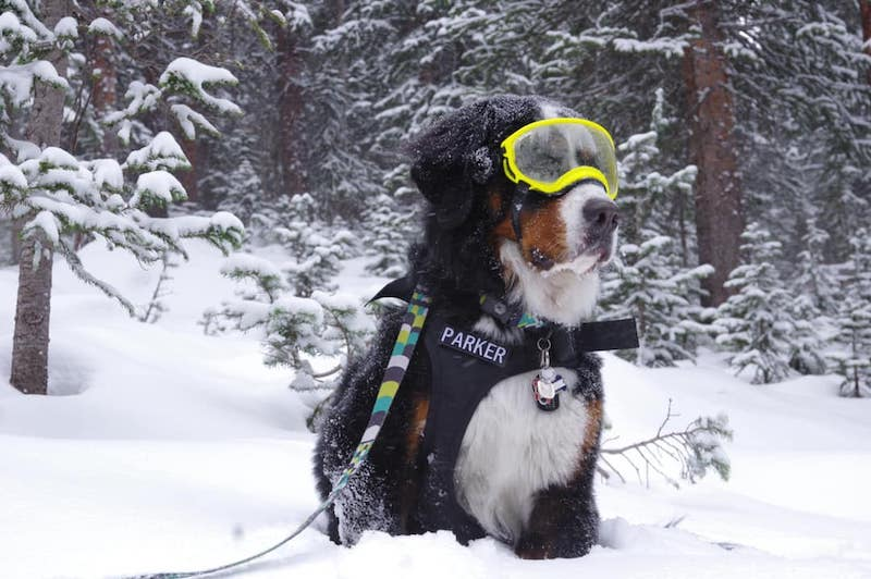 parker the snow dog powder day