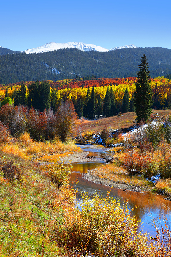 fall color on Cottonwood Pass