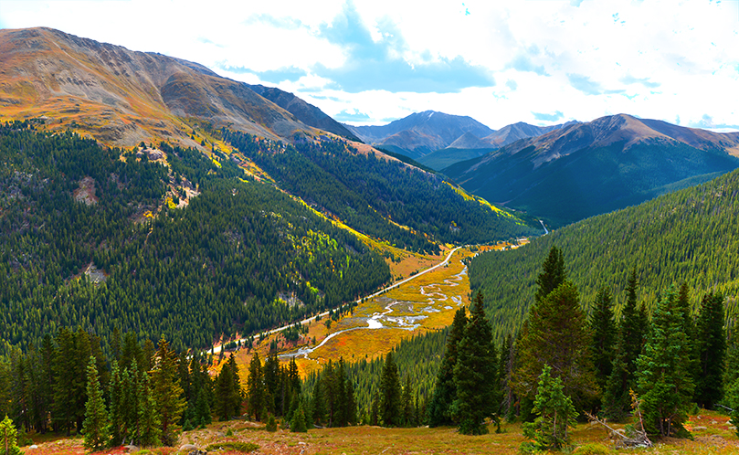 fall color on Independence Pass