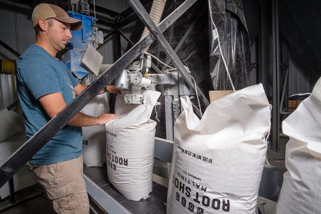 Colorado barely at Root Shoot Malting in Loveland