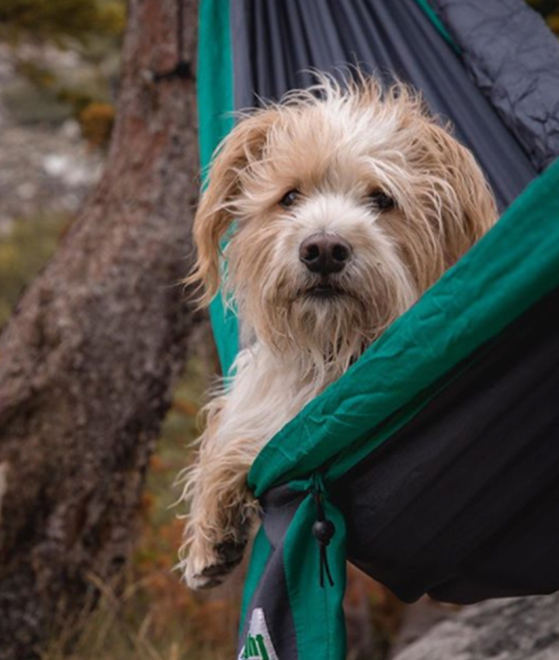 Pets of Instagram, ExplorewithOllie, a Colorado 14er mountaineer dog