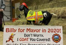 Billy the goat running for mayor of Divide