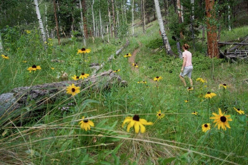 Mt. Esther Trail wildflowers. Photo by Claire Barber.