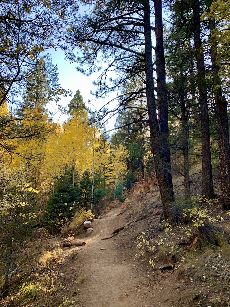 Gold aspen trees along the St. Mary's Falls Trail in Colorado Springs