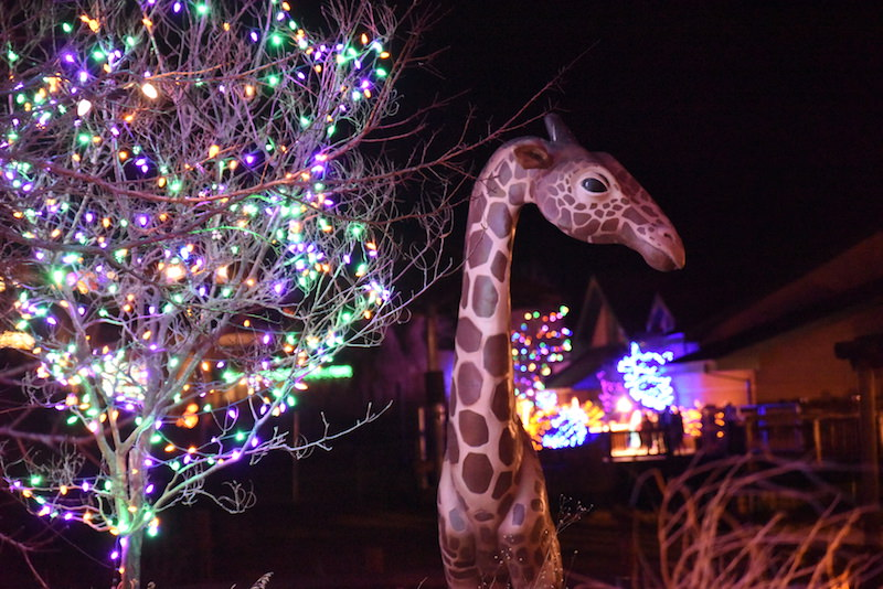 Electric Safari lights at Cheyenne Mountain Zoo is a holiday favorite in Colorado Springs